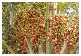 grapes in bengali