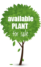 Our Available Plants - IndianNursery.in